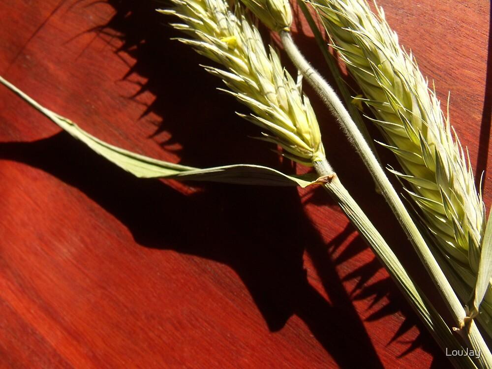 75/365 ears of grain by LouJay