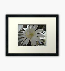 Kaktus Flowers. Framed Print