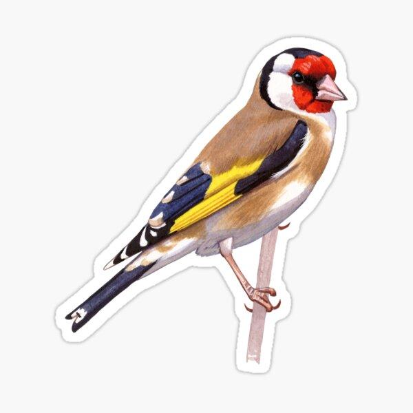 Twitcher Ornithology Animals Gift #16219 Goldfinch Bird Watcher Keyring IP02