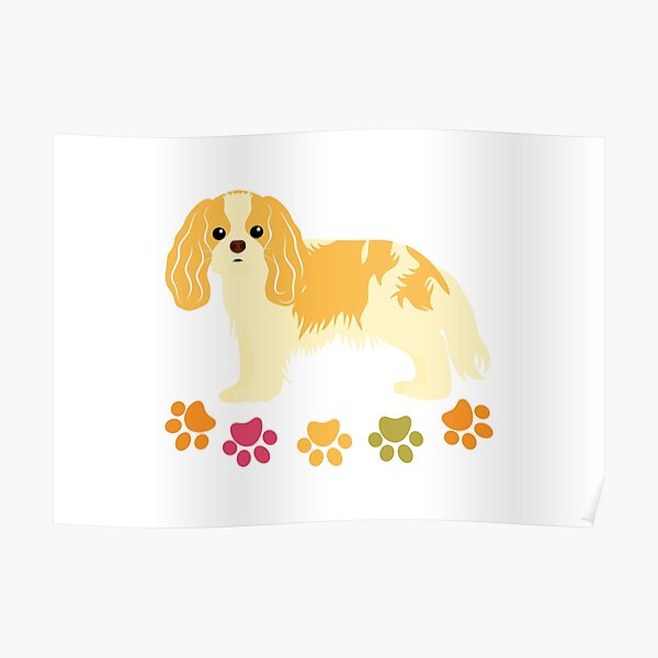 Cavalier King Charles Spaniel and Paw Print - White Poster