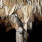 Stone Tree... by plicty