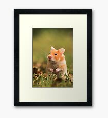 golden hamster pet Framed Print