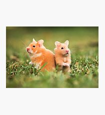 golden hamster pets on lawn Photographic Print