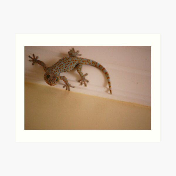 Fabulous Gecko Art Print