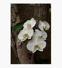 Orchids in bloom Photographic Print