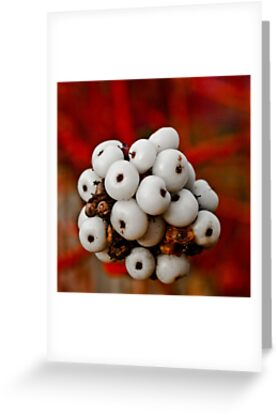 White Berry by Deb Maidment