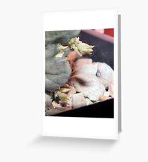 Whitesloanea Crassa Flowers Update Greeting Card