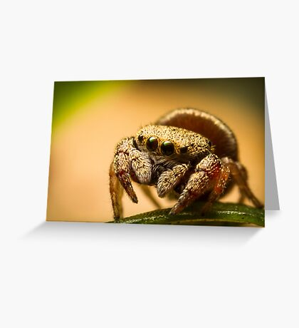 (Simaethula ZZ483) Jumping Spider Greeting Card