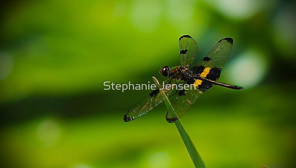 Dragonfly Macro by Stephanie Jensen