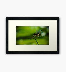 Dragonfly Macro Framed Print
