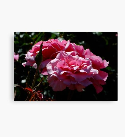 Duet Rose Canvas Print