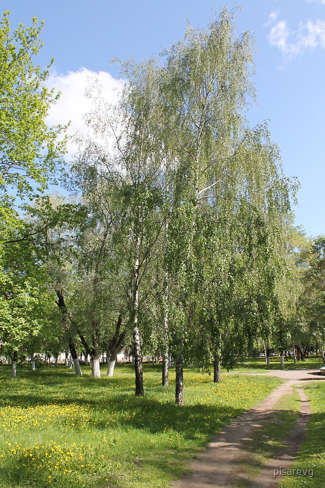 Park in summer  by pisarevg