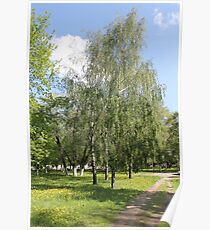 Park in summer  Poster