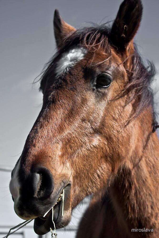 Horse's profile by miroslava
