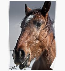 Horse's profile Poster
