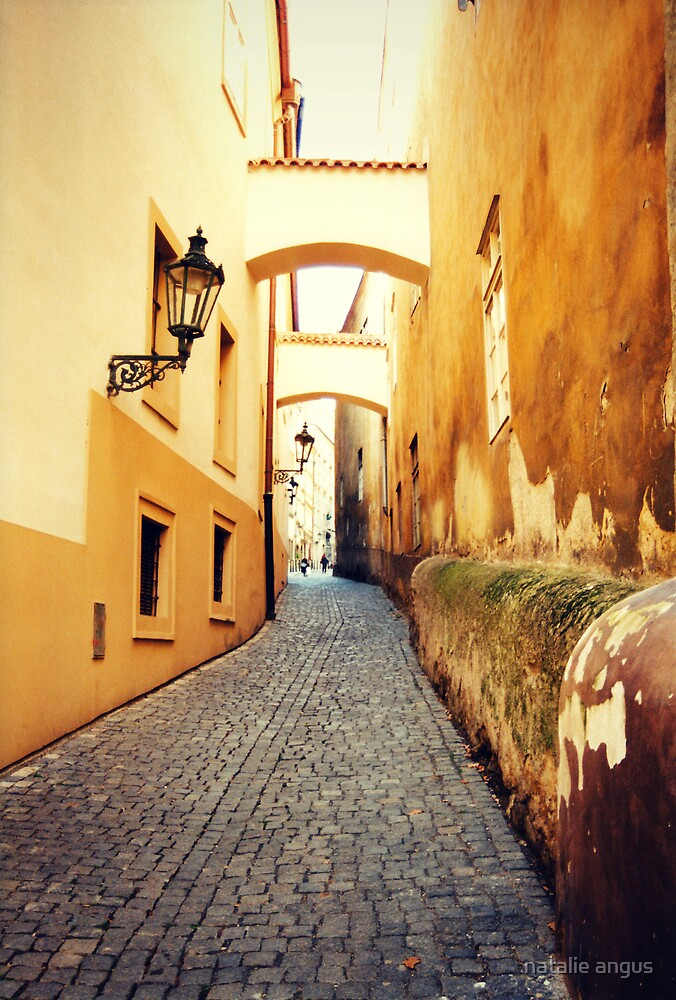through the yellow buildings by natalie angus