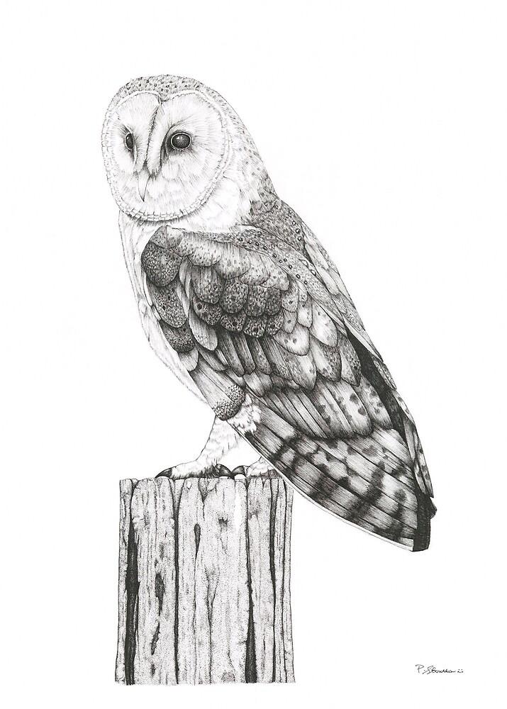 Barn Owl by Paul Stratton