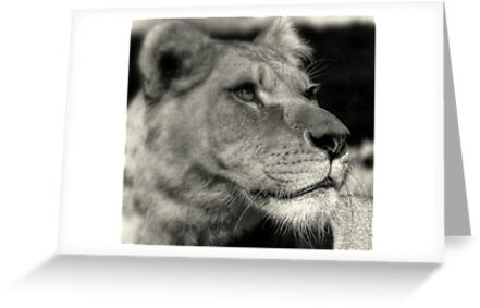 I am Regal  by larry flewers