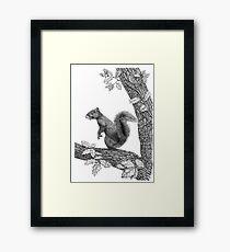 Mr Squirrel Framed Print