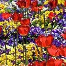 Field of Flowers by Extraordinary Light