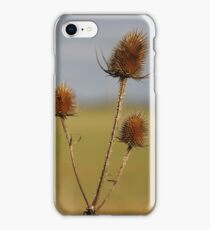Autumn Sunshine iPhone Case/Skin