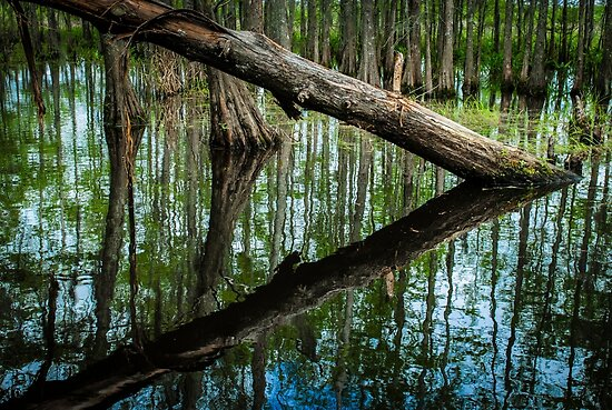 Swampland Louisiana bayou, USA by PhotoStock-Isra