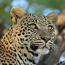 African Beauty!! by jozi1