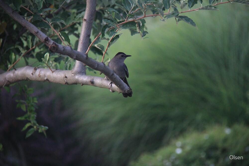 Chat Oiseau soir se posent. .  by Olsen