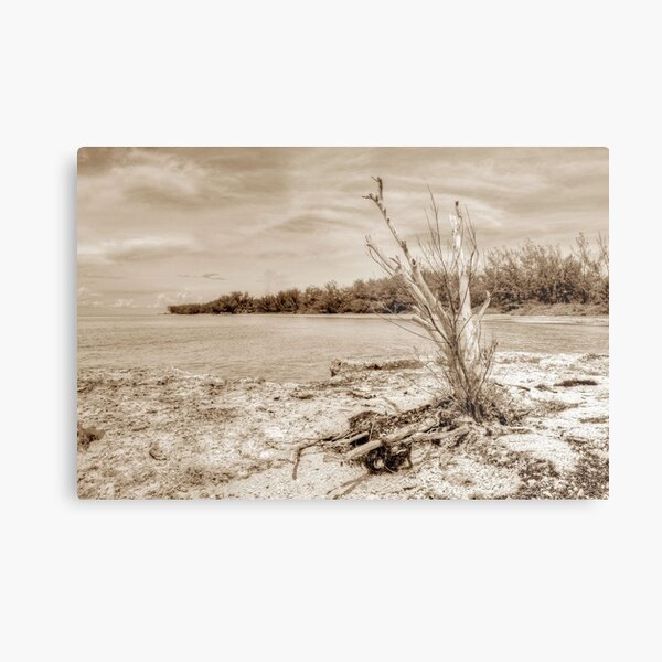 The Sentinel at Coral Harbour in Nassau, The Bahamas Metal Print