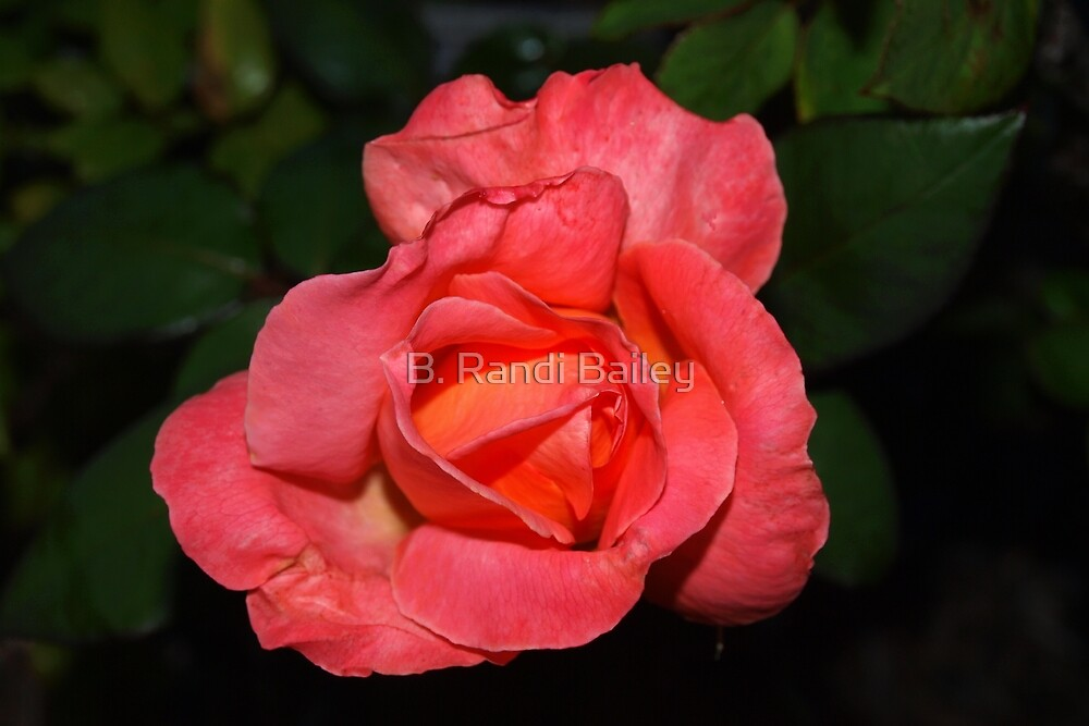 Peach tangerine rose by ♥⊱ B. Randi Bailey