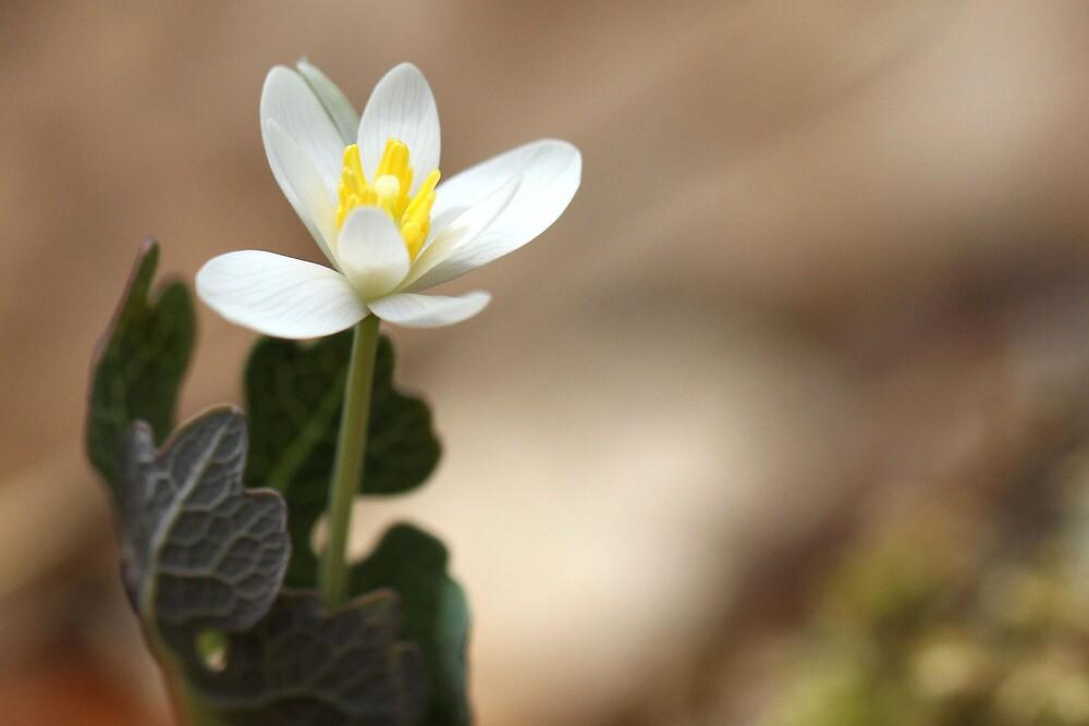 Spring awakening by Salina Gibson