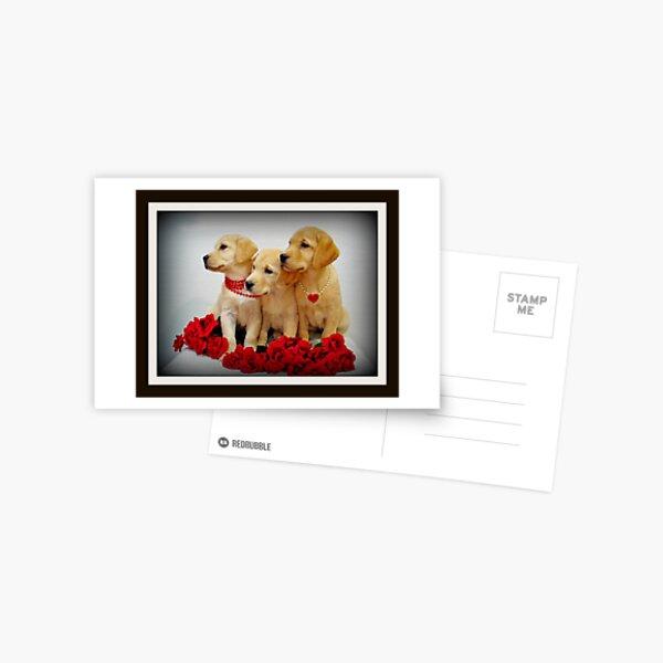 Trio of Roses Postcard