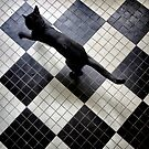 The beauty of the cat... by Louise LeGresley