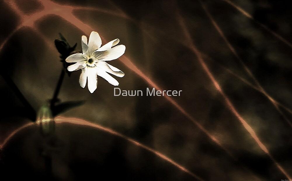 Evening Flower by MissDawnM