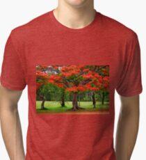 Fiery Poinciana Trees Tri-blend T-Shirt