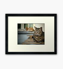 Two cats... Framed Print