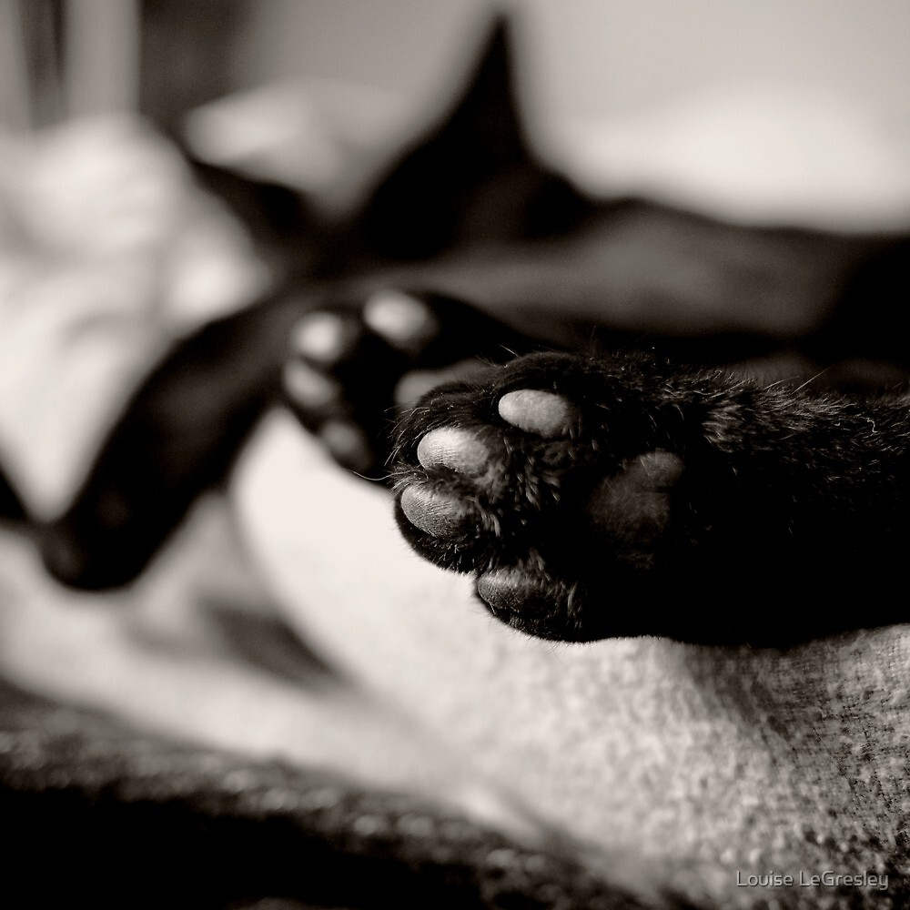 cat paws... by Louise LeGresley