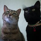 Two cats... by Louise LeGresley