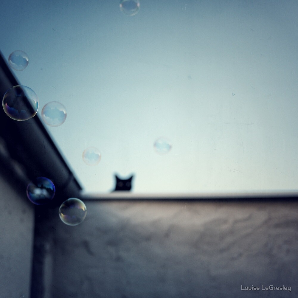 bubble cat.. by Louise LeGresley
