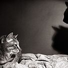 night cats by Louise LeGresley