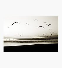 Birds at Newport Photographic Print