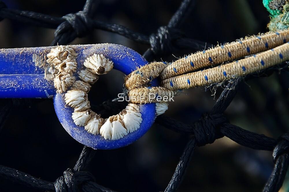 Acorn Barnacles by Susie Peek