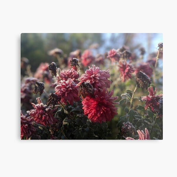 Icy Flowers Metal Print