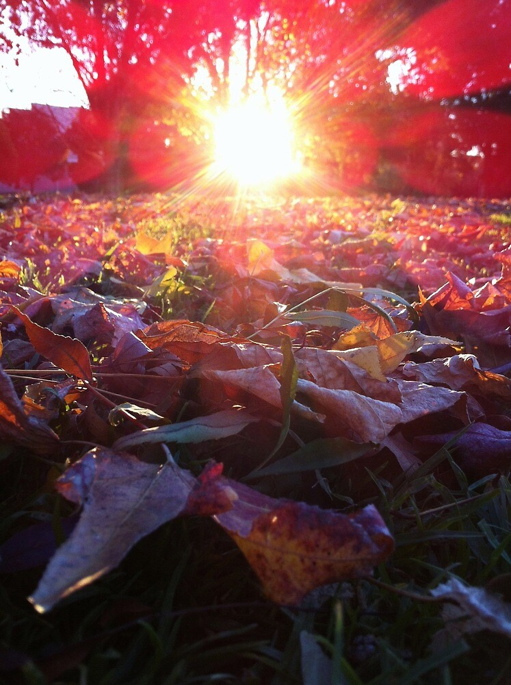 Sunflare and Leaves by Jock Anderson