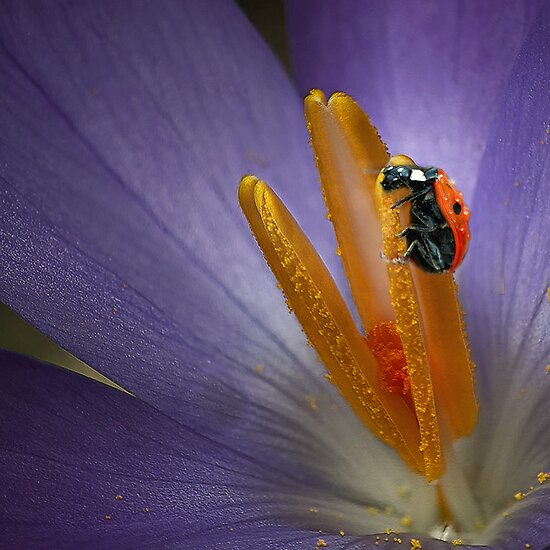 The Ladybug by EbyArts