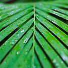 Palm by Dean Bailey