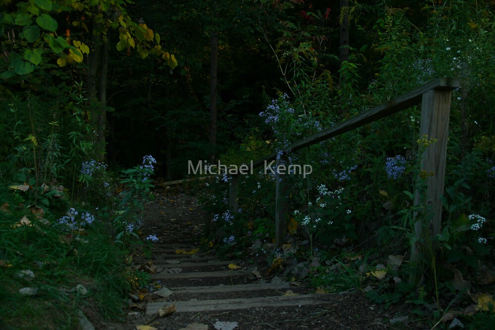 Natural Stairs by Michael  Kemp