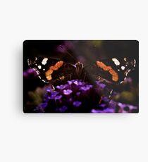 Butterfly on verbena flower. Metal Print