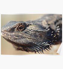 Lizard head Poster