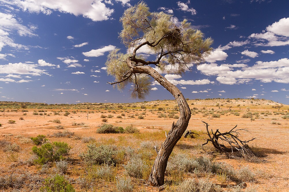 The lonely tree by Brendon Doran